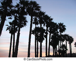 Palm trees silhouetted on sunset background
