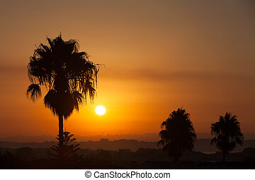 Palm trees silhouettes at sunset in Spain
