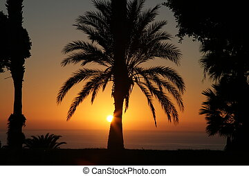 Palm trees silhouettes at sunset in Spain, Tenerife