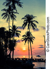 Palm trees silhouettes at tropical