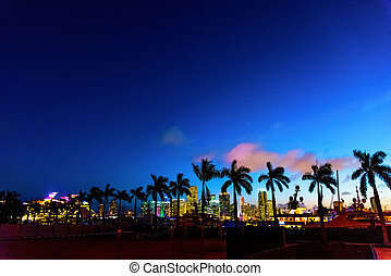 Palm trees silhouettes on a clear night in Miami