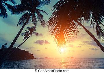 Palm trees silhouettes on a tropical sea beach