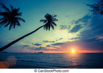 Palm trees silhouettes on tropical beach during sunset.