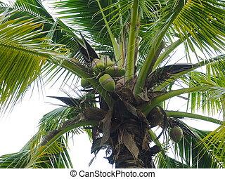 Palm trees .