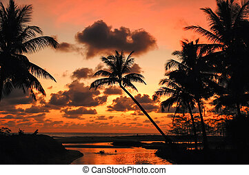 Palm Trees Sunset Colorful Sky backlight ,Thailand
