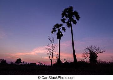 palm trees sunset golden blue sky