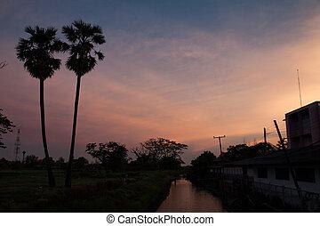 palm trees sunset golden blue sky b