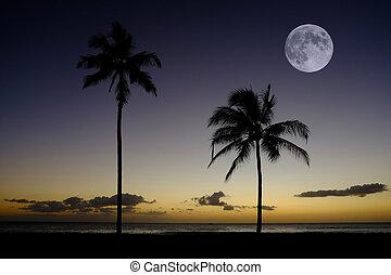 Palm Trees Sunset Near Ocean Beach Tropical Location Full Moon
