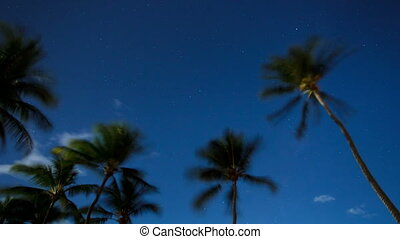Palm trees swaying in a breeze