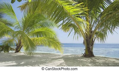 Palm Trees Swaying in a Gentle Breeze in the Maldives - Palm...