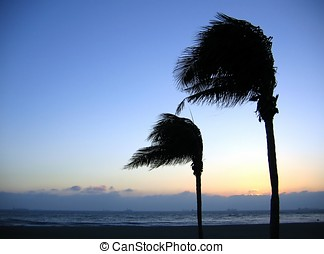 Palm Trees Swaying in the Wind - -- a quiet evening at the...
