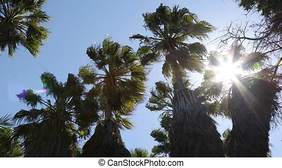Palm trees swinging - Palm trees sway in the wind in back...