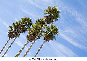 Palm trees - Tall palm trees against a blue sky