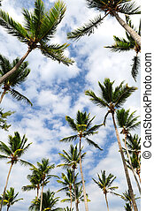 Palm trees - Tropical background of palm tree tops with blue...