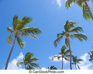 Palm Trees - Tropical palm trees set against bright blue sky...