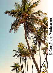 Palm Trees - Tropical palm trees,Ponce Puerto Rico