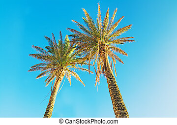 palm trees under a clear sky
