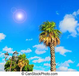 palm trees under a shining sun in Alghero