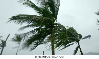 Palm trees under heavy rain and very strong wind. Tropical storm concept. Shot on an action camera. With natural sound.