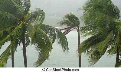 Palm trees under heavy rain and very strong wind. Tropical storm concept.