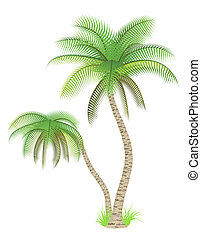 Palm trees - Vector illustration of palm trees over white