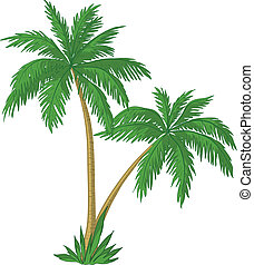 Vector, palm trees with green leaves on white background