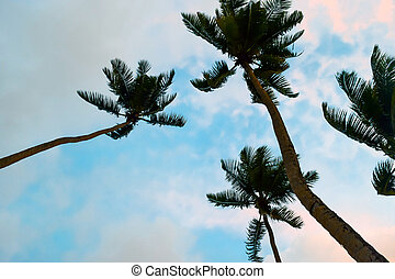 Palm Trees View from the Ground at Sunset in Seychelles