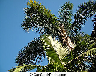 palm trees viewed from below