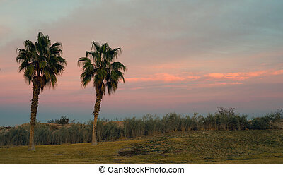 Palm Trees West Coast Tropical California Sunset