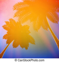 Palm trees with beautiful sunset.