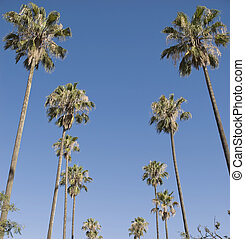 Palm trees with Blue Sky