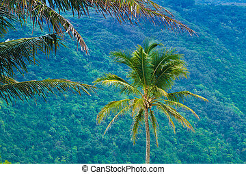 Palm trees with exotic tropical background in Hawaii