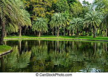 Palm trees with green lake
