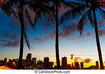 Palm trees with skyscrapers on the background in Miami