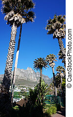 Palm trees with Table mountain in the background