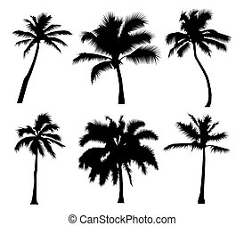 Palm tropical set of black silhouette coconut trees, natural sign, on white background Flat design Illustration