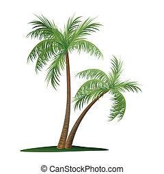palm, två, träd