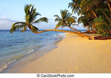 palm, uniek, strand, ondergaande zon , bomen