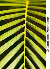 palm vel, op einde