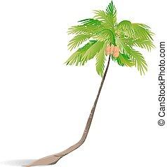 palm., vert, isolé