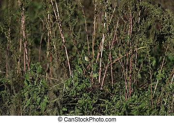 Palm Warbler eye contact - Palm Warbler perched eye contact ...