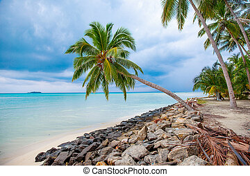 Palm, Water and Beach View on Maldive Coast