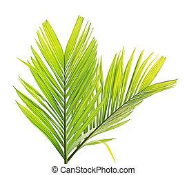 palm, witte , blad, vrijstaand, achtergrond