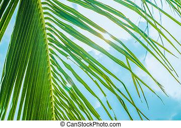 palm, zon, achter, boompje, zee