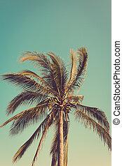 palma, árvore coco