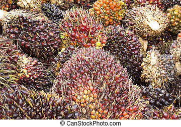 palma óleo, frutas