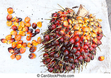 palma, óleo, frutas