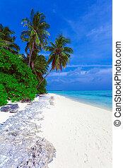 palma, algunos, litoral, árboles, isla