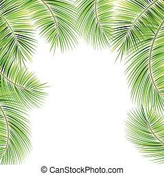 palma, branches., albero