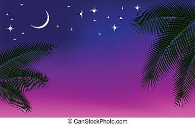 palma, cielo, branch., notte